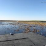 Balade en airboat (hydroglisseur) près d'Orlando